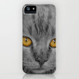 Gray Kitten with Yellow Eyes iPhone Case