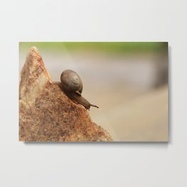 Snail Mountain Metal Print