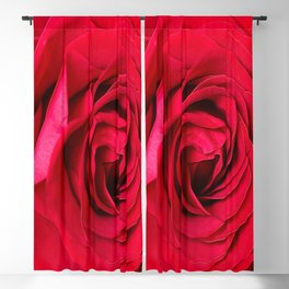 Red Rose Close-up #decor #society6 #buyart Blackout Curtain