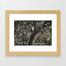 Savannah Spanish Moss Framed Art Print