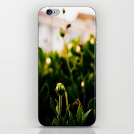 the enlightenment iPhone Skin