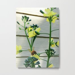 Pollinating Broccoli Metal Print