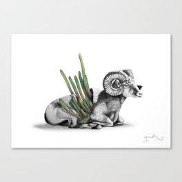 Bighorn Ram Canvas Print