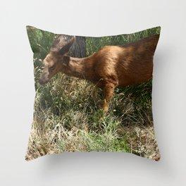 Mule Deer At Zion Park Throw Pillow