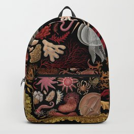 Intertidal Life of the North Atlantic (without species list) Backpack