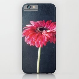 Miss Daisy iPhone Case