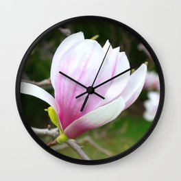 Sweet Magnolia In Springtime Wall Clock