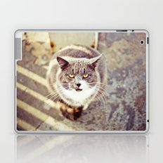 Cat Eyes Laptop & iPad Skin