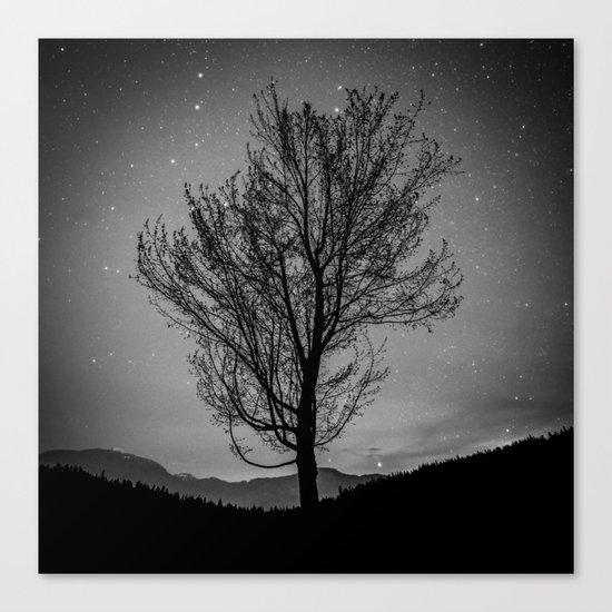 Lost lake solo tree Canvas Print