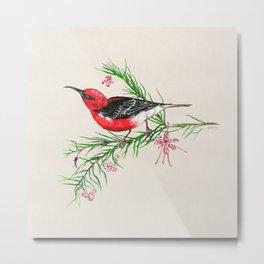 Red Scarlet Honeyeater Metal Print