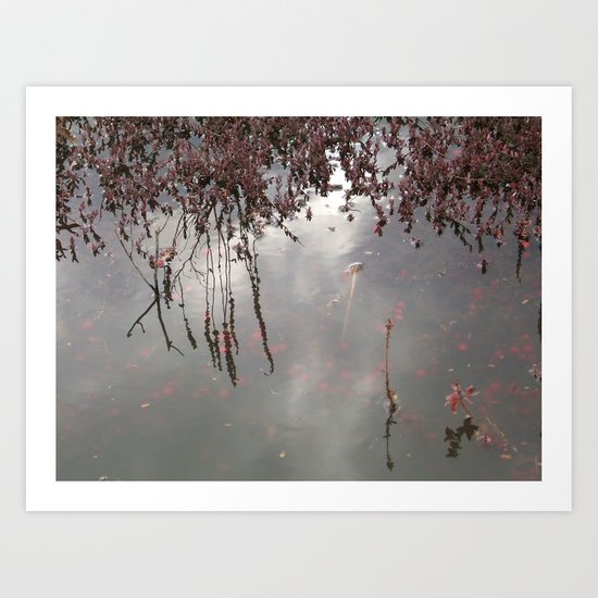 Cranberries Waiting To Be Harvested Art Print