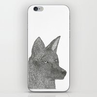 coyote iPhone & iPod Skins featuring Coyote by Amber Lundy Leigh