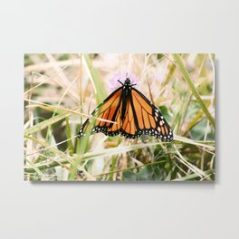 Monarch Butterfly in the Allegheny Mountains Metal Print