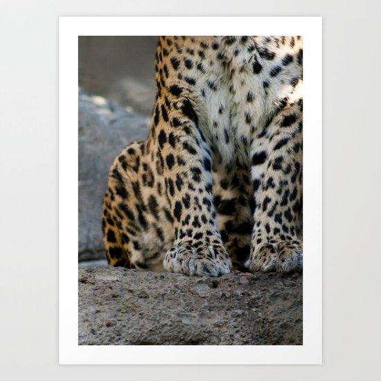 Paws Art Print