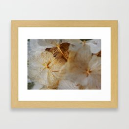 Nature's Lace Framed Art Print