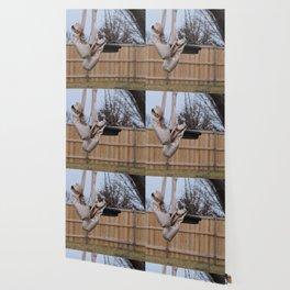 Snowy Pointe Wallpaper