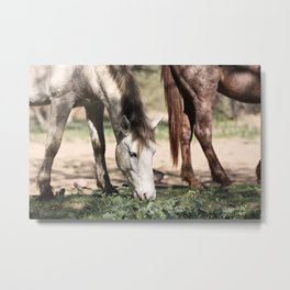 Two Bachelors Metal Print