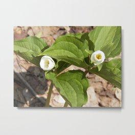 Blooming Trilliums Metal Print