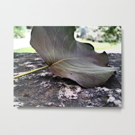 the lonely leaf Metal Print