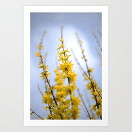 Yellow flowers reaching Art Print