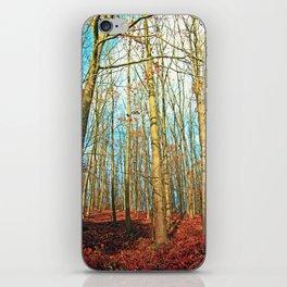 Trees in autumn light iPhone Skin