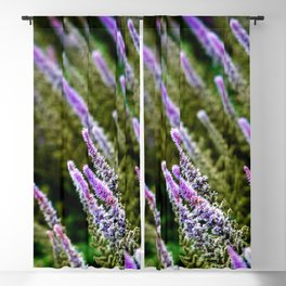 Photograph Purple and Green Prairie Blazing Star Wildflower Blackout Curtain