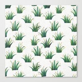 Field of Aloe Canvas Print