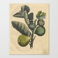 fig Canvas Prints featuring Fig by Connie Goldman