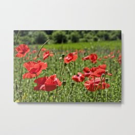 Poppies in Southern France Metal Print
