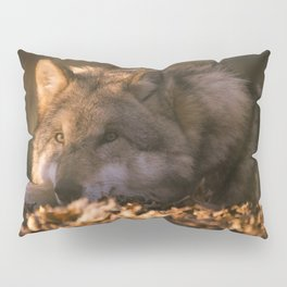 A wolf lying in the evening sun Pillow Sham