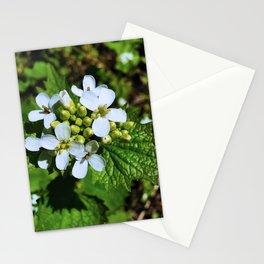 Garlic Mustard Bloom Stationery Cards