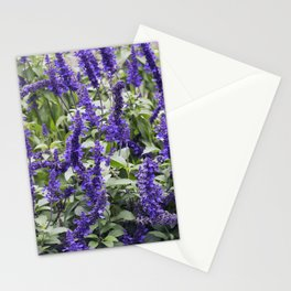 Longwood Gardens Autumn Series 357 Stationery Cards