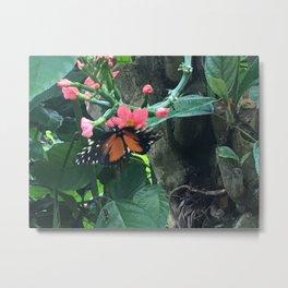 Fluttering Butterfly Metal Print