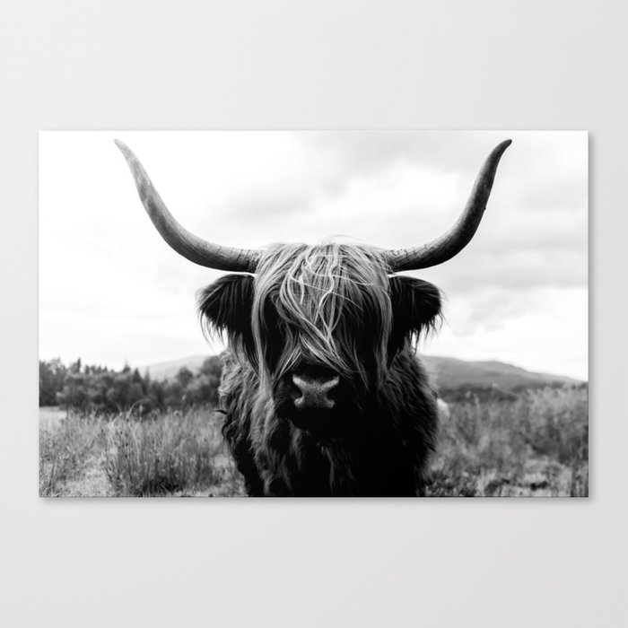 Scottish Highland Cattle Black and White Animal Canvas Print
