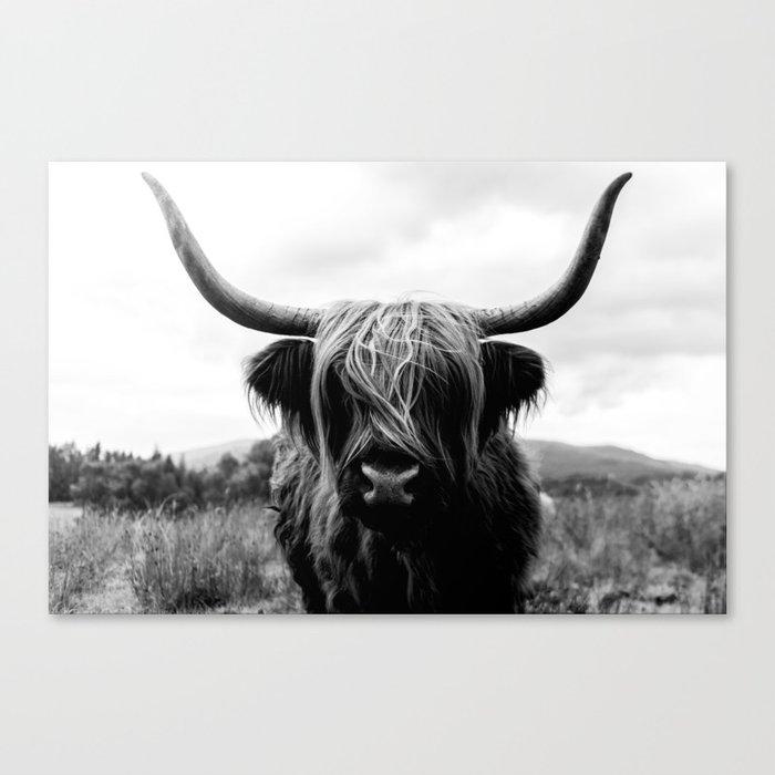 Scottish Highland Cattle Black and White Animal Leinwanddruck