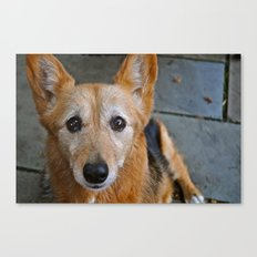 Wide-Eyed Canvas Print