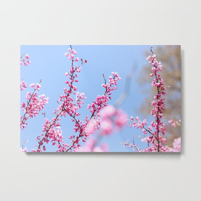 Spring in pink Metal Print