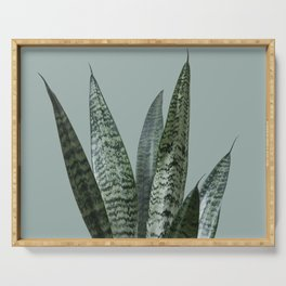Snake plant in green Serving Tray