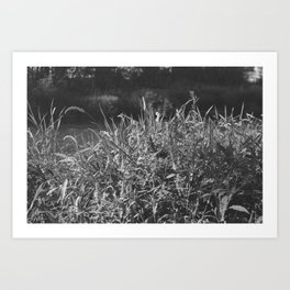 photograph of river landscape and plants in the field in soft green color for clothes, furniture, gi Art Print