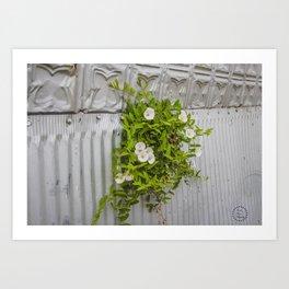 Pressed Tin and Weeds (Creeping Jenny) Art Print