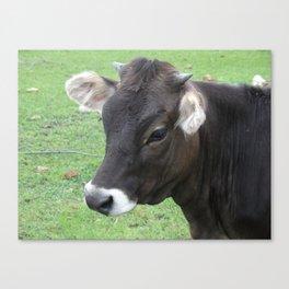 #406 7 2 13 nature cow hobby farm bitterroot mt Canvas Print