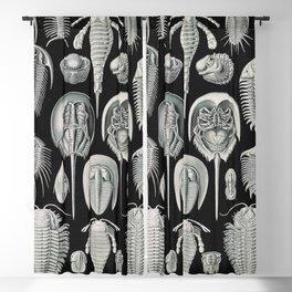 Ernst Haeckel Horseshoe Crab Vintage Illustration Blackout Curtain