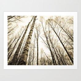 Tree Trunks I Art Print