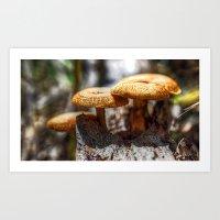 mushrooms Art Prints featuring Mushrooms by Kent Moody