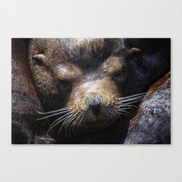 Sleepyhead Sea Lion Canvas Print