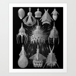 Plankton Shells (Cyrtoidea) by Ernst Haeckel Art Print