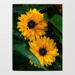 Susan's Flowers Poster