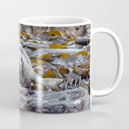 Young seal in the seaweed Coffee Mug
