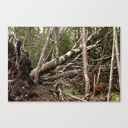 Falling Trees Canvas Print