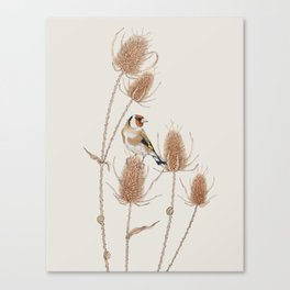 Goldfinch on teasels Canvas Print